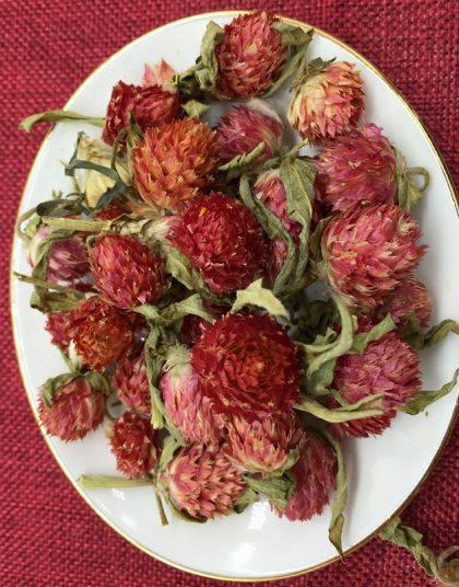 trà hoa bách nhật hồng