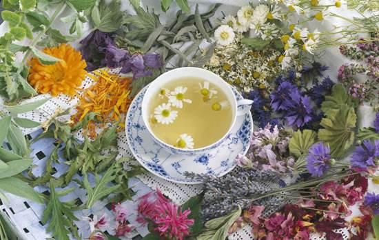 Trà hoa thảo mộc